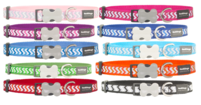 Ziggy Dog Collar