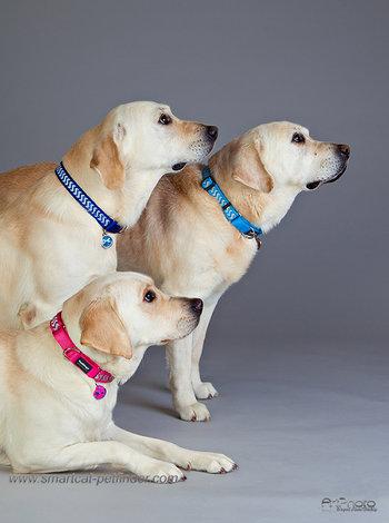 Ziggy reflex hundhalsband - flera färger