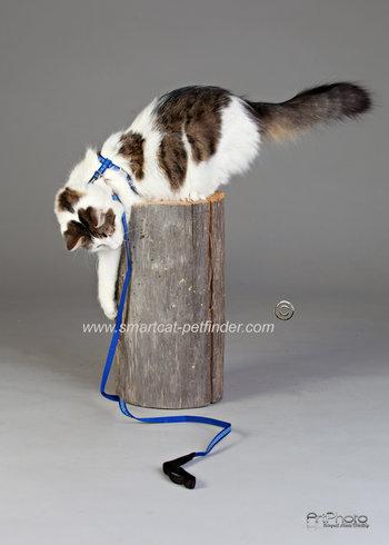 Kattsele Ziggy Marinblå reflex
