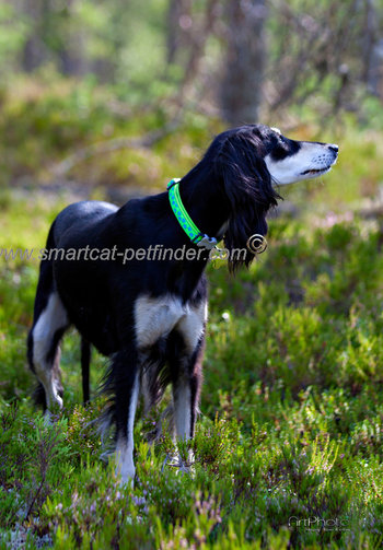 Stars Dog Collar Lime