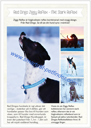 Reklamblad Red Dingo A4 Ziggy