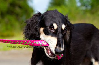 Stars Martingale dog collar Hot Pink