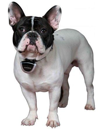 Husdjurskamera - För Hund och Katt