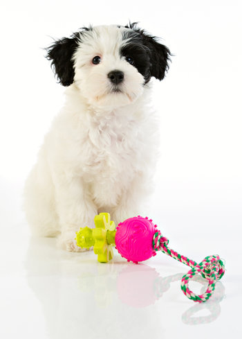Repleksak Dog Addict Chew Pop