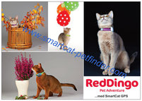 Reklamblad Red Dingo A6 Katt