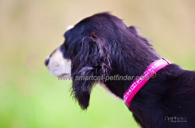 Boneyard Dog Collar