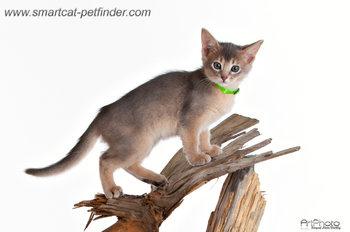 Kitten Lime